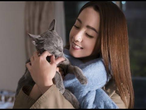 映画『猫は抱くもの』予告編