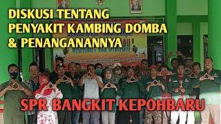 Diskusi Penyakit Kambing Domba dengan Drh. Nur Hasanah | SPR Bangkit Kepohbaru Bojonegoro