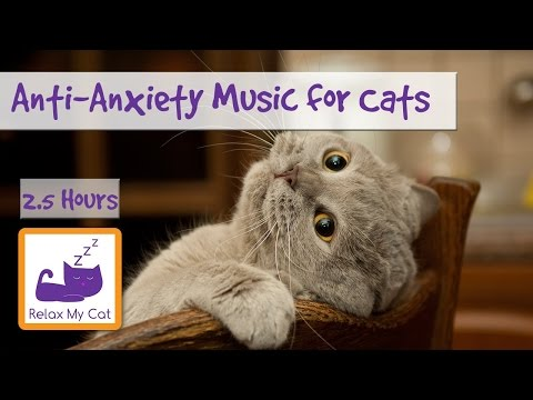 Anti-Anxiety Music for Cats and Kittens! Soothe your Cat from Anxiety with our Relaxation Music!