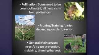 OSU Master Gardener: Low Care Fruit Trees