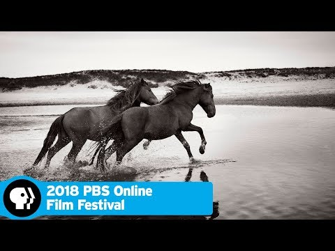 Stronghold of Resistance: Sable Island and Her Legendary Horses   2018 Online Film Festival   PBS