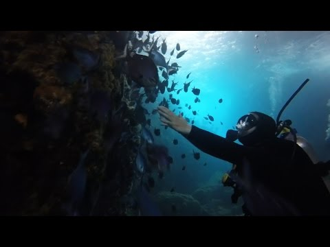 Poor Knights Islands in 4K - Living a Kiwi Life - Ep. 50