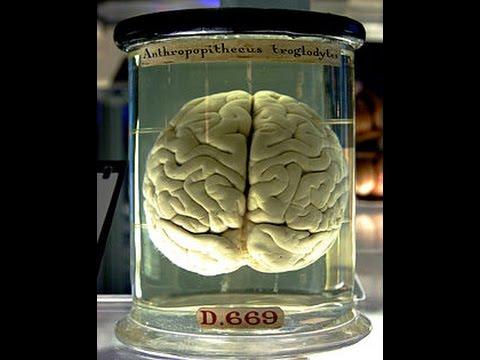 Awesome Human Brain : Best Documentary 2017