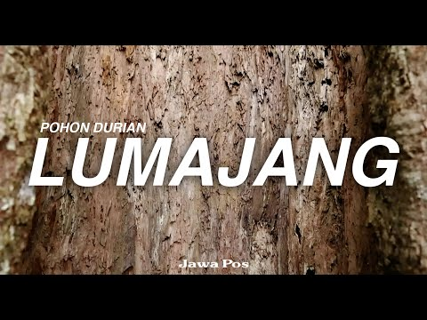 Jawa Pos Belah Durian Episode 10: Pohon Durian Gencono