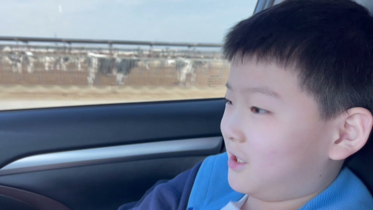 COWS IN AMERICA WITH TIGER TOY TV [Tiger Toy TV] 타이거 토이 TV