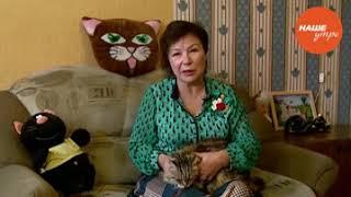 Обратите внимание, что может подстерегать кошку в доме