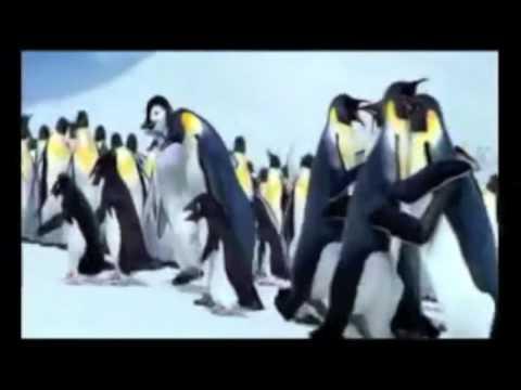 E pousa, pousa (versión pingüinos)