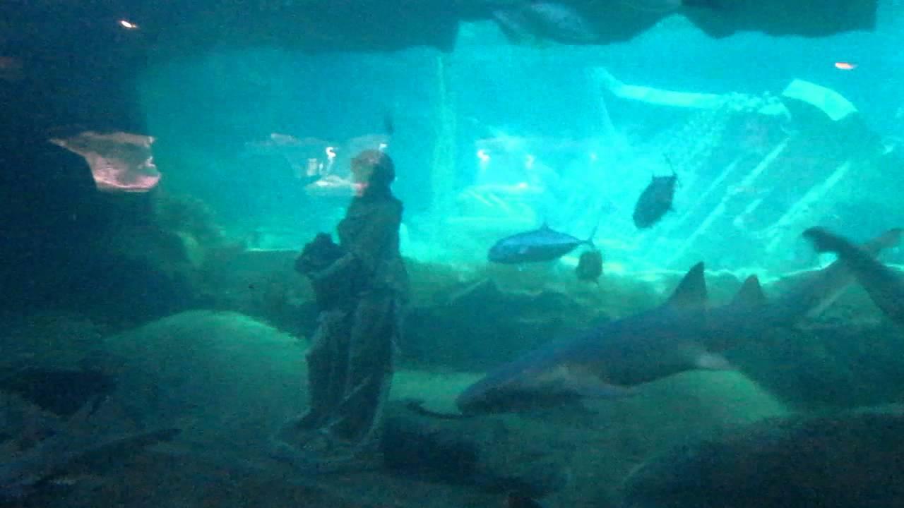 Fish aquarium edmonton - Undergraound Caverns Aquarium West Edmonton Mall