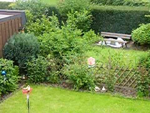 ducks in my garden 1/2 ^^