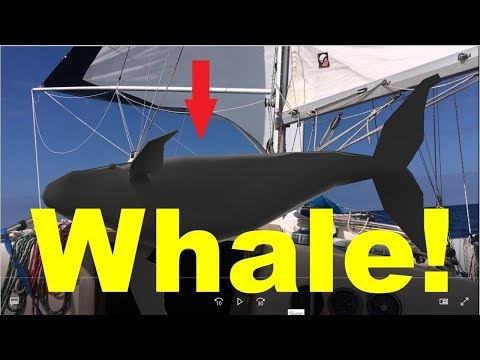 Sailboat Hit by a Whale Mid-Pacific S2E3