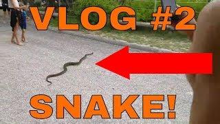 Surfing, Snakes, Sand - Vlog #2 | Life outside YouTube, Birdalert (SHORT)