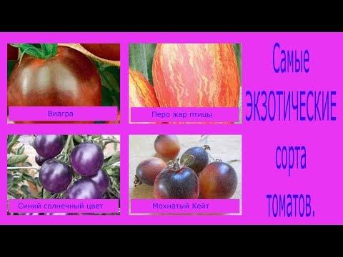 Самые экзотические сорта томатов. Сад и огород выпуск 189