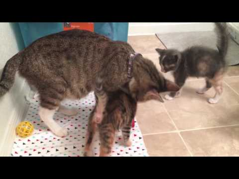Foster Kitten's Lose their Momma, but She Comes Back!