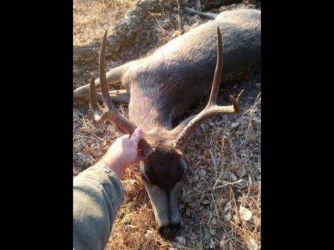 Blacktail Deer Hunt On A Beautiful Private Ranch In California