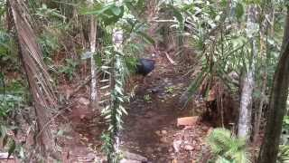 Cassowary Webcam - Daintree Discovery Centre
