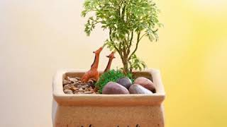 Aralia plant and attractive tiny garden toys make this miniature garden more classy and appealing. You can decorate your room or house with this gorgeous ...