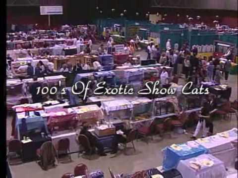 Cat fanciers 2009 1Mb