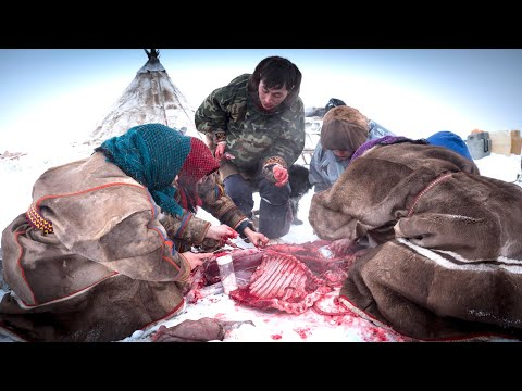 Reindeer Ritual - Raw meat shared by family of Nenet Herders