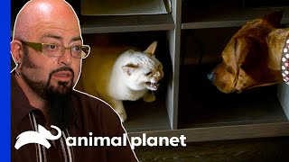 Cats And Dog Fight Over 20 Times A Day! | My Cat From Hell