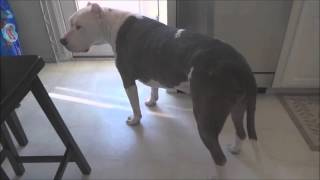 Pit Bull shows just how much he loves Skrillex