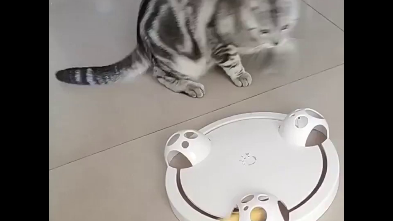 Cat Toys  Interactive-Rotating Mouse Toy Review