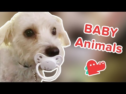 AWWW-dorable: Funniest Baby Animal Videos, Clips & Compilation