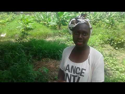 The Banana Farm - Mariama Kunda, The Gambia