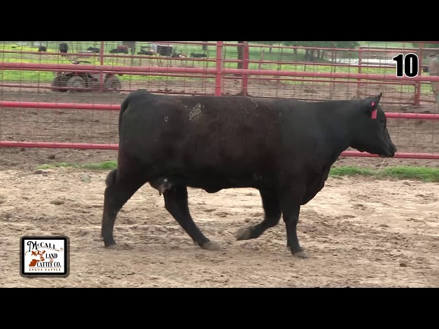 McCall Land and Cattle Lot 10