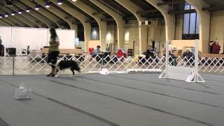 Dpca Nationals Akc Rally Advanced B Trial 1 10.12.13