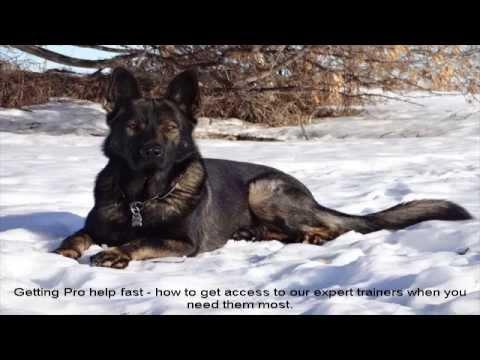German Shepherd Puppies Oregon Help A Mutt