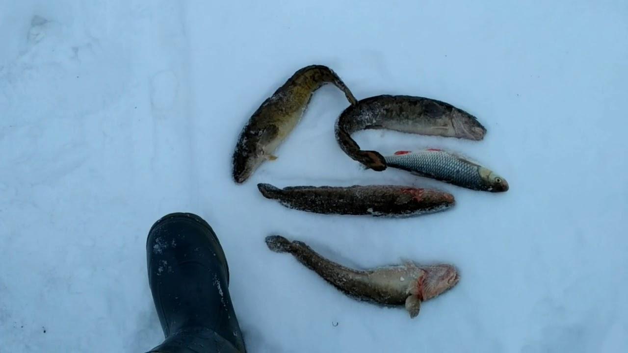 Ловля налима на Оке осенью Необходимые снасти для рыбалки