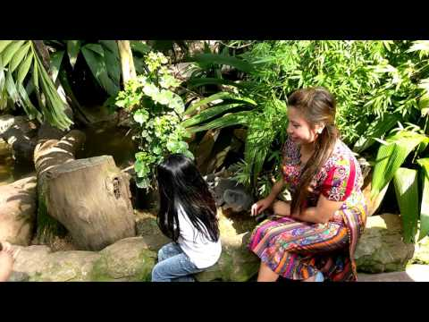 Zoo visitors pet cute wild animals in Guatemala