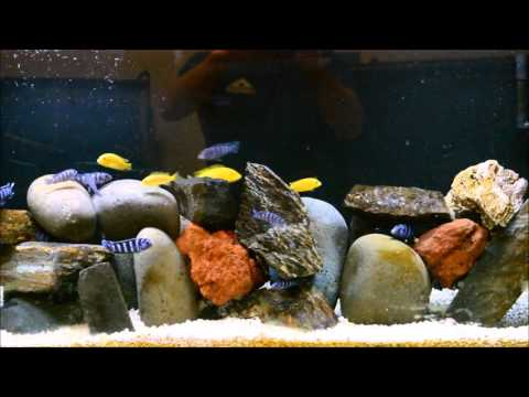 Faster Way To Add Aquarium Salt To Your Aquarium | African Cichlid | Tropical Fish