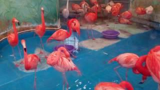 Московский зоопарк ( животные Фото )
