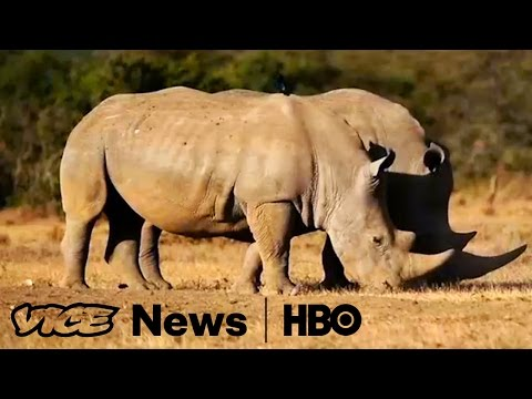 Selling the Rhino in South Africa: VICE News Tonight on HBO