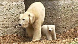 Полярному медвежонку в Мюнхенском зоопарке дали имя (новости)