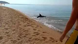 Дельфін ловить рибу. Прикольно