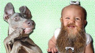 ПРИКОЛЫ ПРО ДЕТЕЙ И ЖИВОТНЫХ. Смотрите видео приколы с детьми и животными