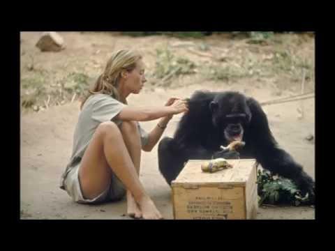 Jane Goodall 80th Birthday Tribute xxox