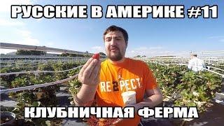 Русские в Америке #11 - Клубничная Ферма и Ginza Japanese Buffet(, 2015-05-02T09:19:02.000Z)