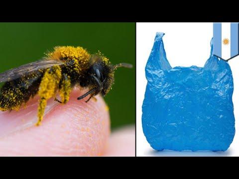 Lebah buat sarang dari plastik - TomoNews
