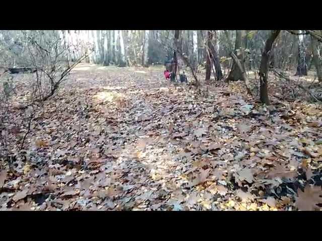 Jesienny spacer w lesie