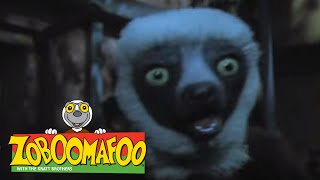 Zoboomafoo 109 - Night time (Full Episode)
