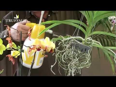 quels soins apporter une orchid e doovi. Black Bedroom Furniture Sets. Home Design Ideas