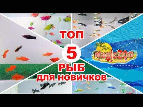 ТОП 5 неприхотливых аквариумных рыб. Аквариумные рыбки для начинающих. Каких рыбок лучше завести.