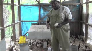 Poultry Farming - Eggs and Broilers