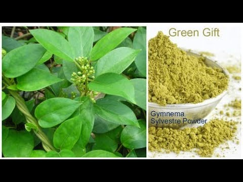 Is Gymnema Sylvestre One Of The Best Herbs For Diabetes