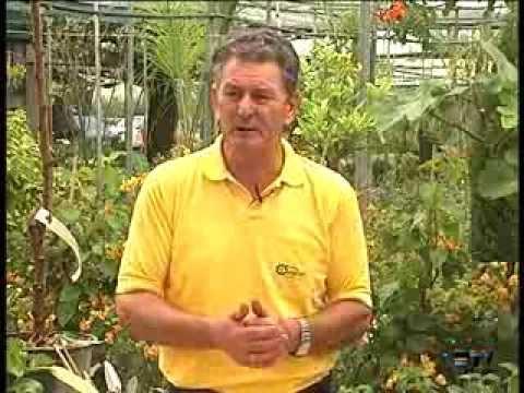 El Jardinero En Casa Rboles Frutales Youtube