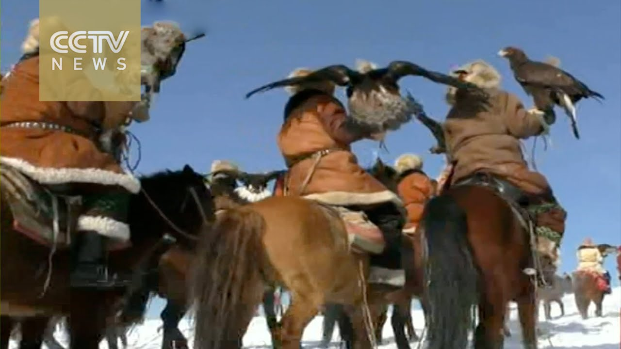 Falcon Herd falcon competition in xinjiang a test of speed and agility