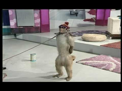 Street Entertainer - Monkey / Goat | Life Skills TV